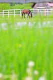 Cavalo na exploração agrícola Foto de Stock