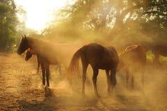 Cavalo na exploração agrícola Foto de Stock Royalty Free