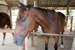 Cavalo na exploração agrícola estável Fotografia de Stock Royalty Free