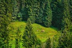 Cavalo na floresta fotos de stock