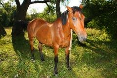 Cavalo na floresta foto de stock