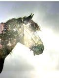 Cavalo na floresta mágica Imagem de Stock Royalty Free