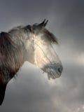 Cavalo na floresta mágica Fotos de Stock Royalty Free