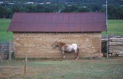 Cavalo na frente da estrutura do adôbe, Pecos, nanômetro imagem de stock royalty free