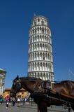 Cavalo na frente da torre inclinada de Pisa Imagens de Stock Royalty Free