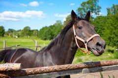 Cavalo na gaiola ao ar livre Fotografia de Stock Royalty Free