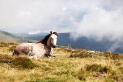 Cavalo na grama da montanha Imagem de Stock