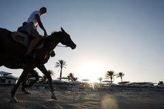 Cavalo na praia Imagens de Stock Royalty Free