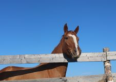 Cavalo na vila Imagem de Stock Royalty Free