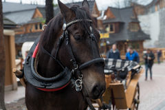 Cavalo na vila de Zakopane, Polônia, Polônia fotos de stock