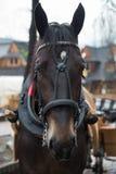 Cavalo na vila de Zakopane, Polônia, Polônia imagens de stock royalty free