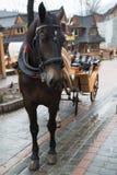 Cavalo na vila de Zakopane, Polônia, Polônia imagens de stock