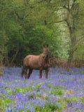 Cavalo nas flores Foto de Stock