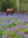 Cavalo nas flores Imagem de Stock Royalty Free