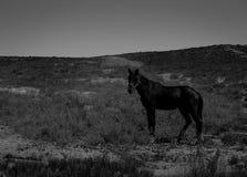 Cavalo nas montanhas Imagem de Stock