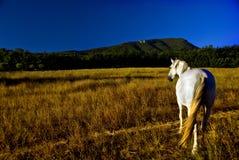 Cavalo no campo   Fotos de Stock