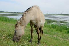 Cavalo no campo aberto Fotografia de Stock