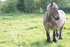 Cavalo no campo aberto Fotos de Stock Royalty Free