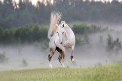 Cavalo no campo nevoento fotos de stock
