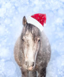 cavalo no chapéu de Santa em um fundo azul com bokeh e neve Imagem de Stock Royalty Free