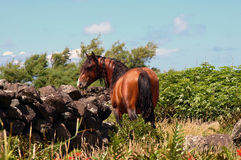 Cavalo no console de Soa Jorge Fotos de Stock Royalty Free