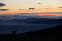 Cavalo no crepúsculo Imagem de Stock Royalty Free