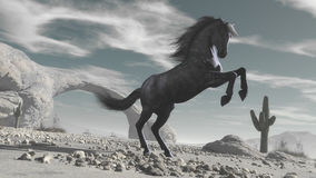 Cavalo no deserto foto de stock royalty free