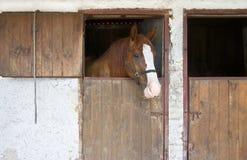 Cavalo no estábulo Fotos de Stock