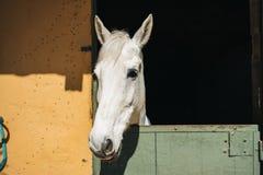 cavalo no estábulo Imagem de Stock
