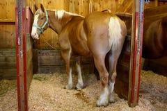Cavalo no estado justo Fotos de Stock Royalty Free