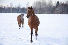 Cavalo no inverno imagem de stock