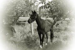 Cavalo no jardim Rebecca 36 imagens de stock royalty free