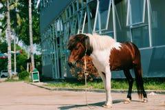 Cavalo no jardim zoológico Fotos de Stock Royalty Free