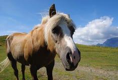 Cavalo no monte Fotos de Stock Royalty Free