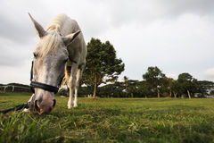 Cavalo no parque equino de UTM Fotografia de Stock