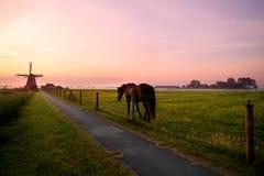 Cavalo no pasto e moinho de vento no nascer do sol Imagens de Stock