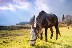 Cavalo no pasto no fulgor de noite Fotografia de Stock