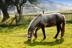 Cavalo no pasto no fulgor de noite Imagem de Stock