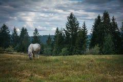 Cavalo no plano da montanha foto de stock