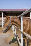 Cavalo no prado Imagens de Stock