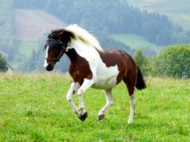 Cavalo no prado Fotos de Stock