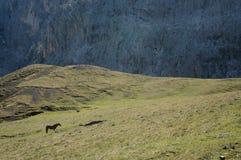 Cavalo no prado na frente da parede íngreme e grande da rocha Imagem de Stock Royalty Free