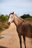 Cavalo no trajeto Imagens de Stock Royalty Free