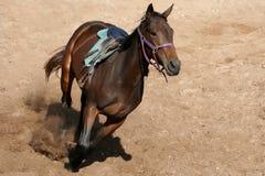 Cavalo no treinamento Imagem de Stock Royalty Free