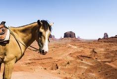 Cavalo no vale do monumento Imagens de Stock Royalty Free
