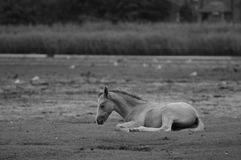 Cavalo novo selvagem de Forrest Fotos de Stock