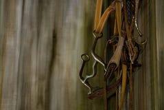 Cavalo nupcial Imagens de Stock Royalty Free