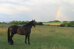 Cavalo observando o arco-íris fotografia de stock