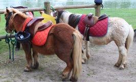 Cavalo para a excursão Fotos de Stock