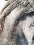 55) detalhes cinzento do cavalo ( Imagem de Stock